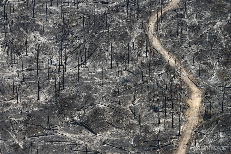 Burning Rainforest in the Amazon